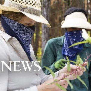 'We have barely scratched the surface' of the medicinal value of plants: Expert
