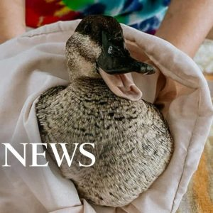 Rescue group works to save marine life after California oil spill