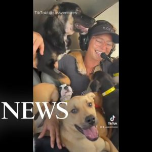 Woman fights to save dogs from being euthanized | WNT